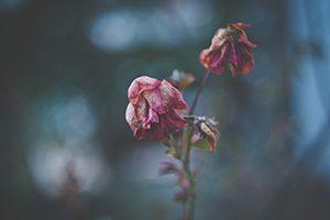 Wilted Flower (Part 2)